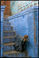 Goat covered with blanket on a blue entrance steps. Jodhpur, Rajasthan, India ( color)