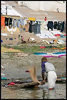 Man beating dirt out of laundry on Ganges riverbank. Varanasi, Uttar Pradesh, India