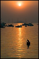 Man fishing from rowboat and anchored yachts, sunrise. Mumbai, Maharashtra, India