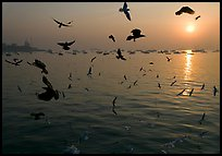 Multitude of birds flying in front of sunrise over harbor. Mumbai, Maharashtra, India (color)