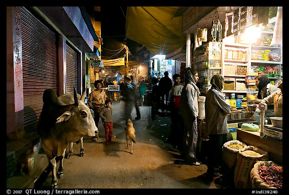 Sacred cow and street by night, Taj Ganj. Agra, Uttar Pradesh, India (color)