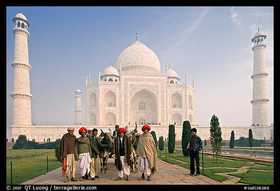 Men with turbans and cows in front of Taj Mahal, early morning. Agra, Uttar Pradesh, India (color)