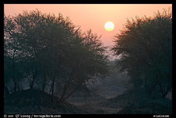 Trees at sunrise, Keoladeo Ghana National Park. Bharatpur, Rajasthan, India (color)