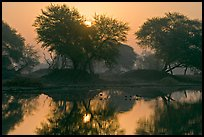 Pond at sunrise, Keoladeo Ghana National Park. Bharatpur, Rajasthan, India