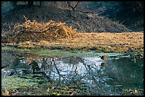 Pond and bird, Keoladeo Ghana National Park. Bharatpur, Rajasthan, India ( color)