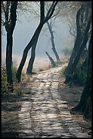 Secondary path, Keoladeo Ghana National Park. Bharatpur, Rajasthan, India (color)