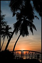 Palm trees and fence at sunrise. Goa, India