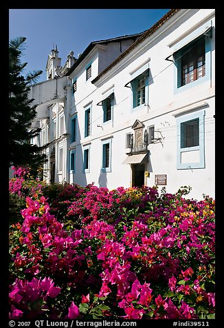Convent of St Monica and flowers, Old Goa. Goa, India (color)