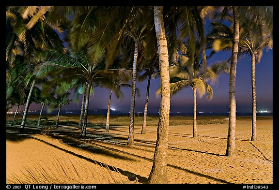 Palm trees and Miramar Beach at twilight. Goa, India