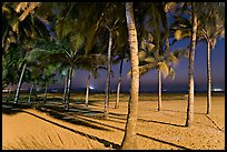 Palm trees and Miramar Beach at twilight. Goa, India (color)