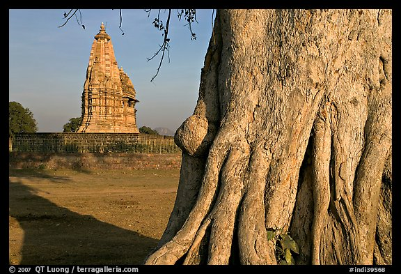 Javari Temple and tree, Eastern Group, late afternoon. Khajuraho, Madhya Pradesh, India (color)