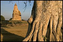Javari Temple and tree, Eastern Group, late afternoon. Khajuraho, Madhya Pradesh, India