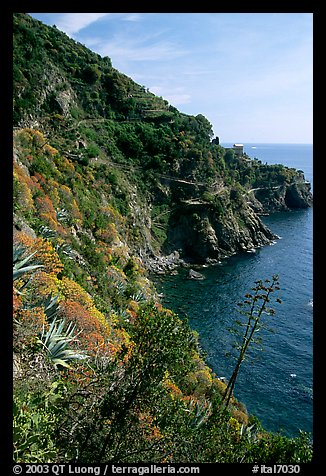 Coastline and cliffs along the Via dell'Amore (Lover's Lane), near Manarola. Cinque Terre, Liguria, Italy