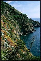 Coastline and cliffs along the Via dell'Amore (Lover's Lane), near Manarola. Cinque Terre, Liguria, Italy (color)