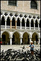 Boy feeding the pigeons in fron tof the Palazzo Ducale,  Piazza San Marco (Square Saint Mark), mid-day. Venice, Veneto, Italy (color)