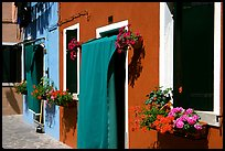Multicolored houses and flowers,  Burano. Venice, Veneto, Italy