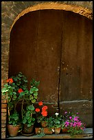 Old wooden door and flowers. San Gimignano, Tuscany, Italy (color)