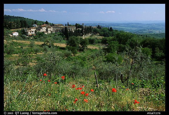 Flowers and rural landscape, Chianti region. Tuscany, Italy