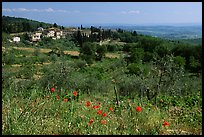 Flowers and rural landscape, Chianti region. Tuscany, Italy ( color)