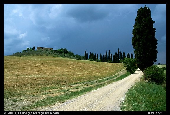 Path lined with cypress trees, Le Crete region. Tuscany, Italy (color)