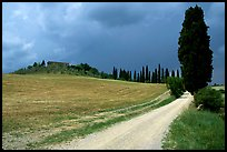 Path lined with cypress trees, Le Crete region. Tuscany, Italy