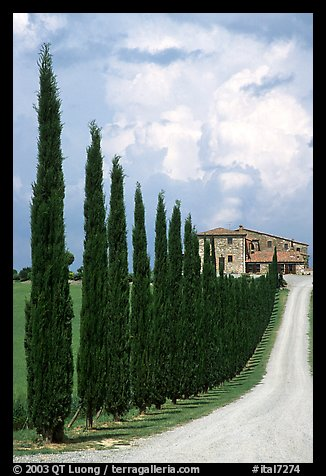 Rural road lined with cypress trees, Le Crete region. Tuscany, Italy