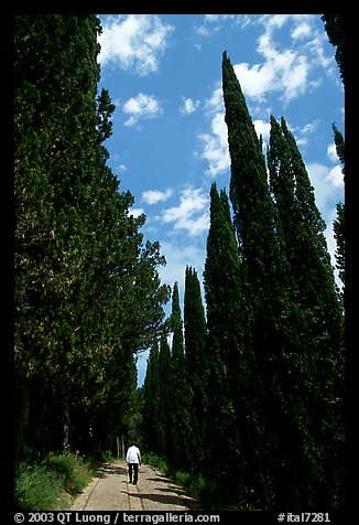 Alley bordered by cypress trees. Tuscany, Italy (color)