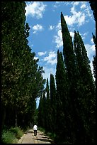 Alley bordered by cypress trees. Tuscany, Italy