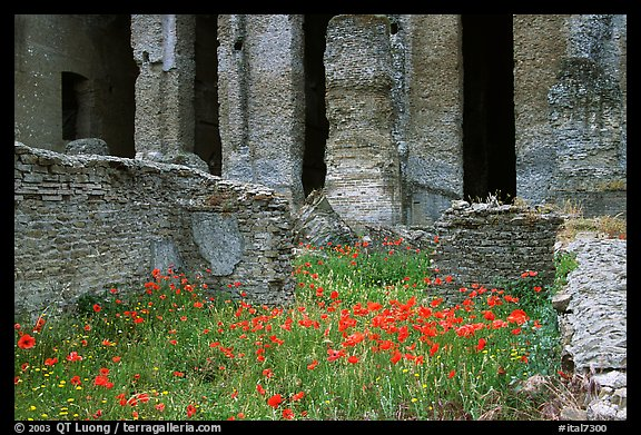 Red poppies and ruins of the Praetorium, Villa Adriana. Tivoli, Lazio, Italy (color)