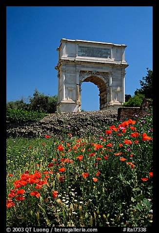 Popies and Arch of Titus, Roman Forum. Rome, Lazio, Italy