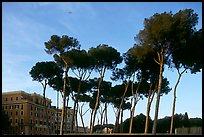 Pines trees and houses. Rome, Lazio, Italy (color)