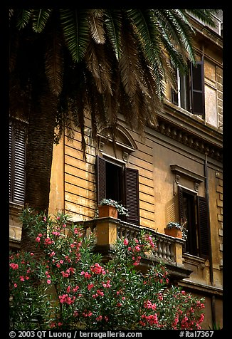 Palm tree and building. Rome, Lazio, Italy (color)