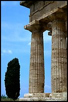 Cypress and columns of Doric Greek Temple of Neptune. Campania, Italy (color)