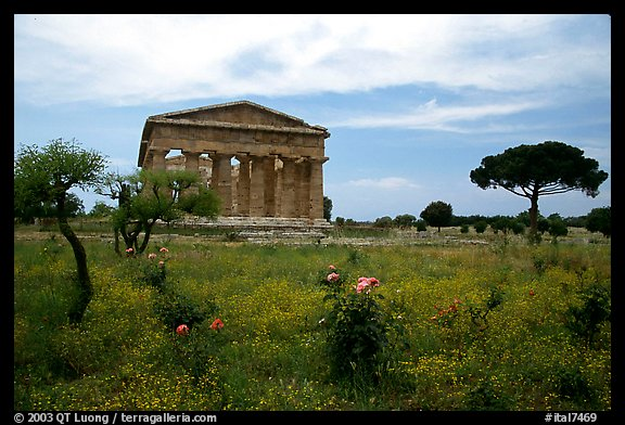 Wildflowers and Temple of Neptune. Campania, Italy