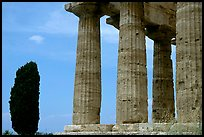 Cypress and Doruc columns of  Temple of Neptune. Campania, Italy (color)
