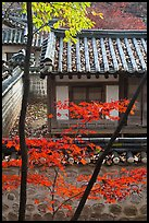 Bright autumn leaves and traditional architecture, Yeongyeong-dang, Changdeok Palace. Seoul, South Korea ( color)