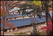 Fall foliage and tile rooftops, Yeongyeong-dang, Changdeokgung Palace. Seoul, South Korea (color)