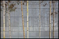 Bamboo reflected in marble wall, Dongdaemun Design Plaza. Seoul, South Korea ( color)