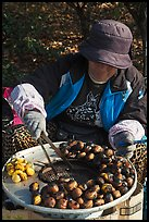 Woman grilling chestnuts. Daegu, South Korea (color)