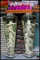 Gingseng roots in jars, Yangnyeongsi, Namseongno. Daegu, South Korea (color)