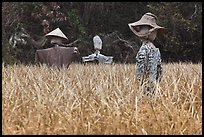 Scarecrows in field. Hahoe Folk Village, South Korea