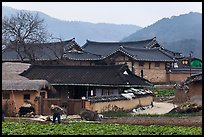 Villager tending to fields in front of ancient houses. Hahoe Folk Village, South Korea (color)