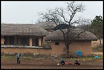 Villagers cultivating fields by hand in front of straw roofed houses. Hahoe Folk Village, South Korea