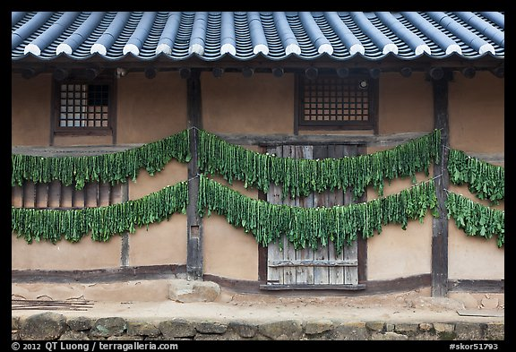 House wall with greens drying. Hahoe Folk Village, South Korea (color)