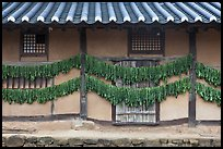 House wall with greens drying. Hahoe Folk Village, South Korea ( color)