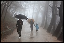 Family walking on path in the rain, Seokguram. Gyeongju, South Korea (color)