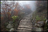 Stone stairs in fog, Seokguram. Gyeongju, South Korea (color)