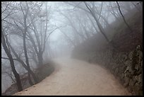Path in fog, Seokguram. Gyeongju, South Korea (color)