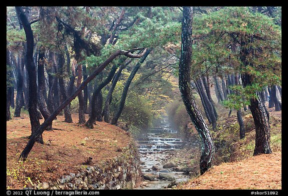 Landscaped stream in forest, Mt Namsan. Gyeongju, South Korea (color)