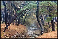 Landscaped stream in forest, Mt Namsan. Gyeongju, South Korea ( color)